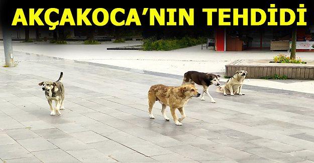 Akçakoca'da  Köpek Çetesi