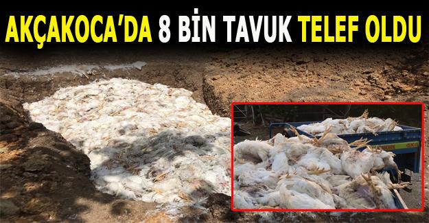 Sıcak havadan dolayı 8 bin tavuk telef oldu