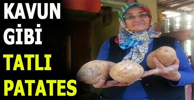 BU PATATESİN TANESİ 2 KİLO GELİYOR (VİDEO HABER)
