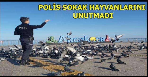 AKÇAKOCA POLİSİ SOKAK HAYVANLARINA YEM BIRAKTI