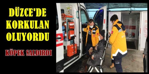 SOKAK KÖPEĞİ CAN ALIYORDU..