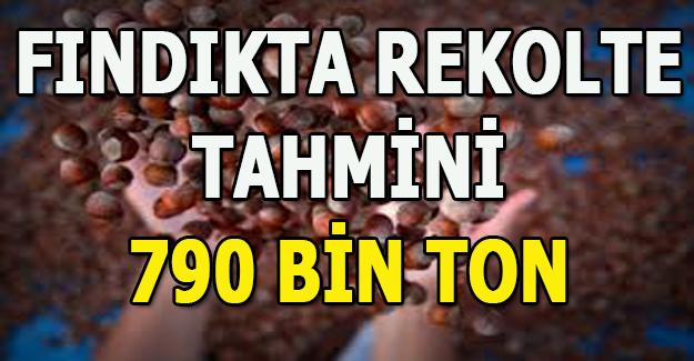 Türkiye'nin fındıkta rekolte tahmini 790 bin ton