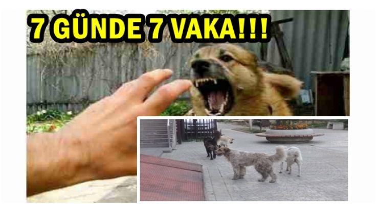 AKÇAKOCA HALKI SOKAK KÖPEKLERİNDEN ŞİKAYETÇİ!!!