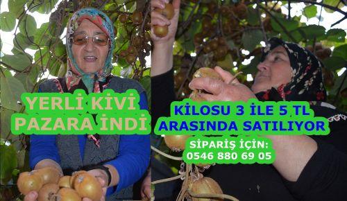 Akçakoca'da yerli kivi pazara indi