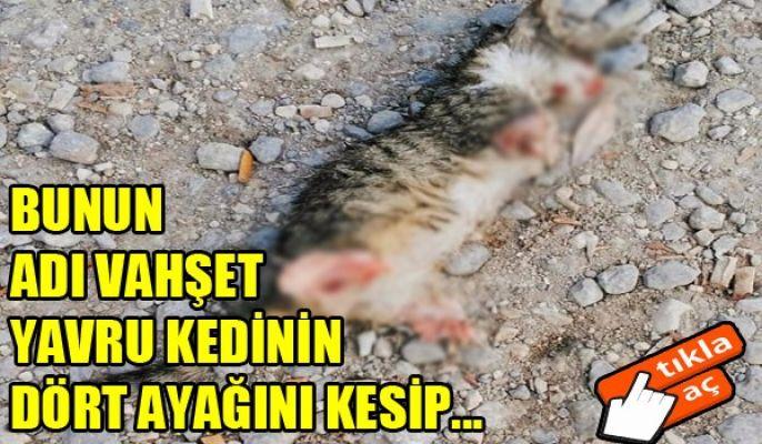 AZMİLLİ'DE VAHŞET...