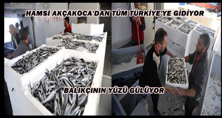 HAMSİ AKÇAKOCA'DAN TÜM TÜRKİYE'YE