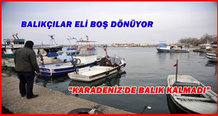 KARADENİZ'DE BALIK KALMADI