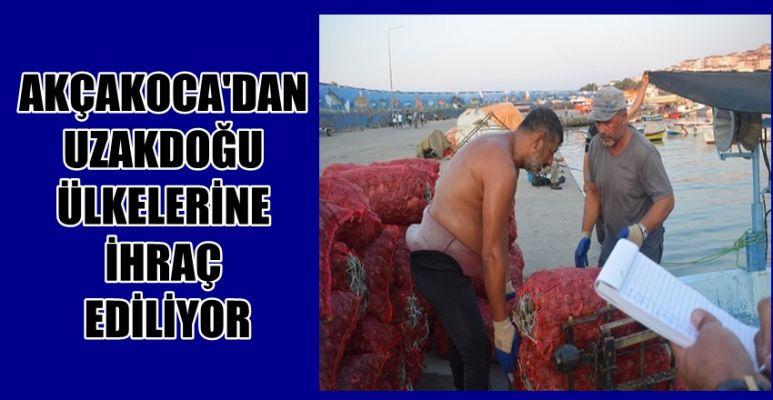 Salyangoz, Karadenizli balıkçıların gelir kaynağı oldu (VİDEO HABER)