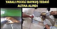Akçakoca 'da Yaralı Baykuş Tedaviye Alındı