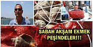 """Balıkçıların geçim kaynağı """" Salyangoz""""..."""