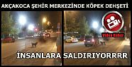 BU KÖPEK SALDIRIYOR