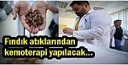 Fındık atıklarından kemoterapi yapılacak