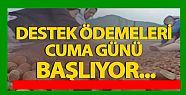 FINDIK DESTEKLEME ÖDEMELERİ BAŞLIYOR...