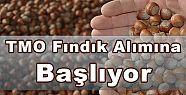 TMO FINDIK ALIMINA BAŞLIYOR
