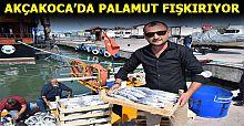 14 metrelik tekneden 8 bin palamut çıktı