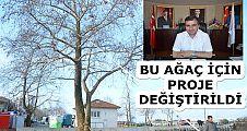 AK PARTİLİ BAŞKAN'IN AĞAÇ SEVGİSİ