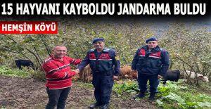 JANDARMA, 15 KAYIP BÜYÜKBAŞ HAYVANLARI...