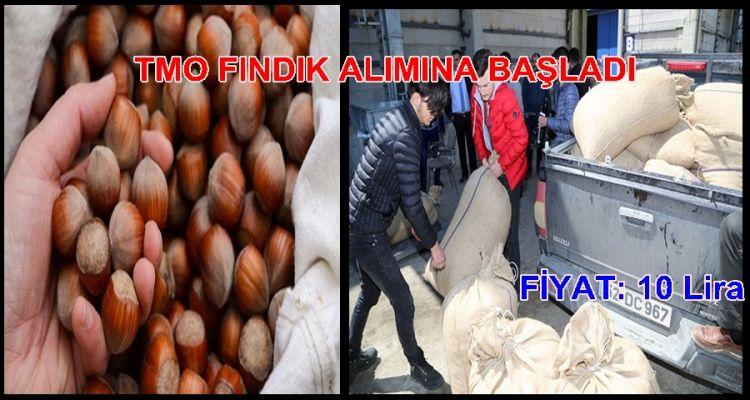 TMO FINDIK ALIMINA BAŞLADI